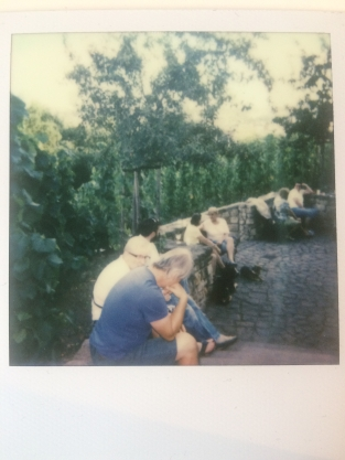Vineyard polaroid